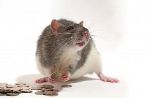 money rat